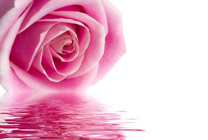 Rosenwasser das Elixier für die Haut