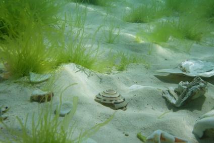Schönheit aus dem Meer-Algen